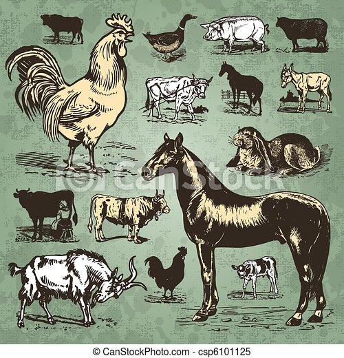 farm animals vintage set (vector) - csp6101125