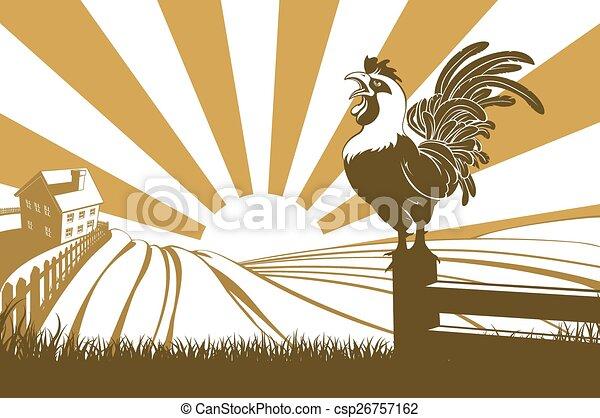 Farm chicken crowing at dawn - csp26757162