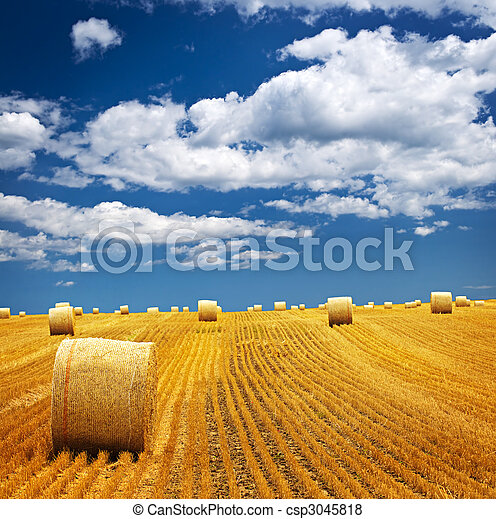 Farm field with hay bales - csp3045818