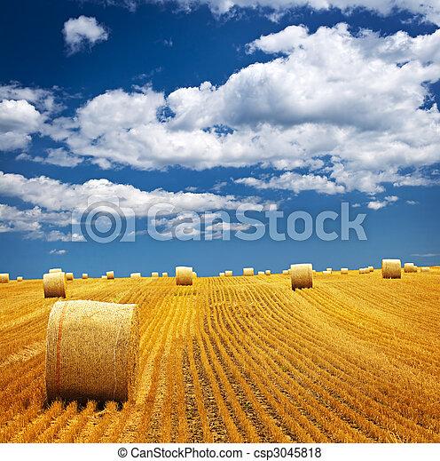 Farm field with hay bales - csp3045818
