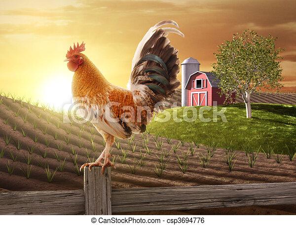 Farm fresh morning - csp3694776
