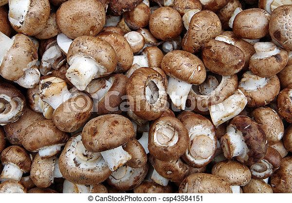 Farm fresh portobello mushrooms - csp43584151