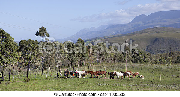 Farm in Swellendam, South Africa - csp11035582