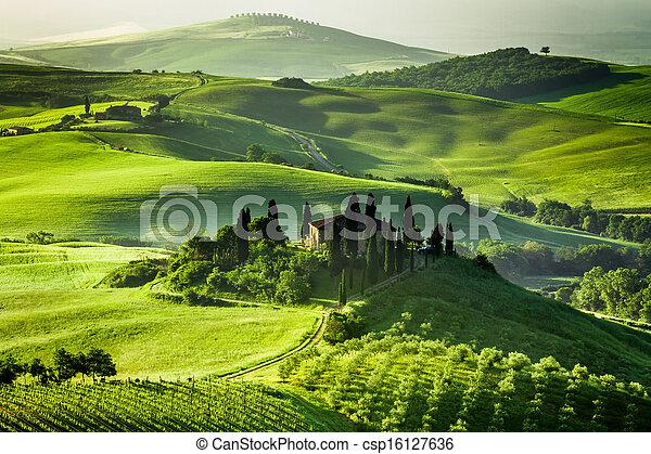 farma, oliva, vinice, lesík - csp16127636