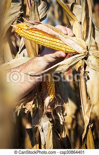 Farmer at corn harvest - csp30864401