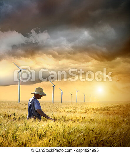 Farmer checking his crop of wheat - csp4024995