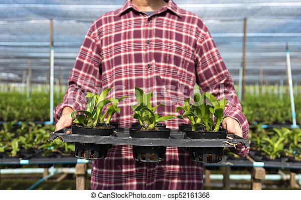 Farmer fresh vegetables, agriculture food production concept agricultural growing activity - csp52161368