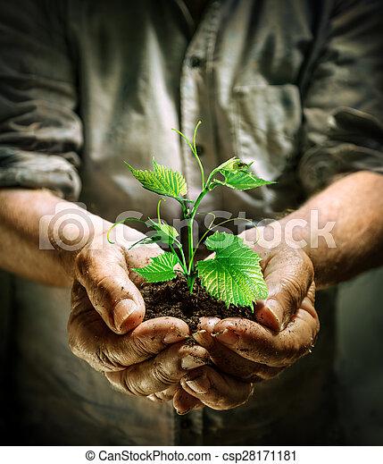 farmer hands holding a green plant - csp28171181