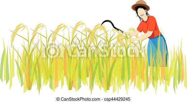 Farmer Harvest Rice Cartoon Shape Stock Vector - Illustration of grass,  hook: 121982457