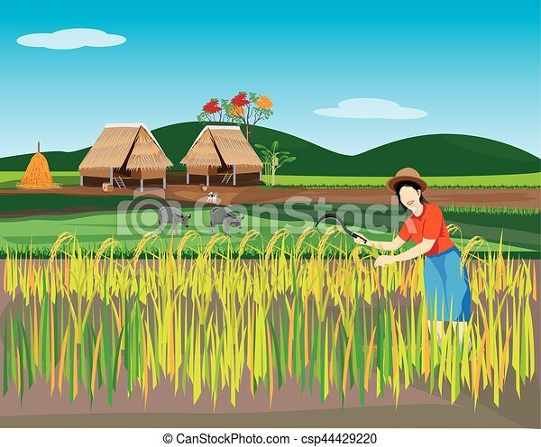 Agriculturist Harvest Rice Design Royalty Free Cliparts, Vectors, And Stock  Illustration. Image 57125490.