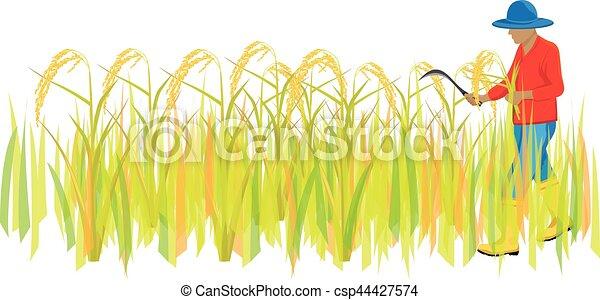 Harvest Rice Stock Illustrations – 11,190 Harvest Rice Stock Illustrations,  Vectors & Clipart - Dreamstime