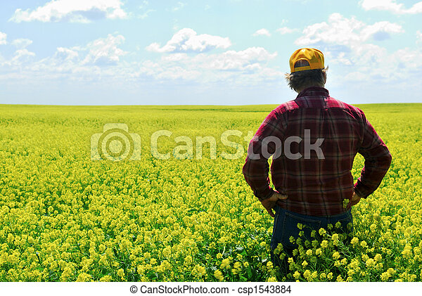 Farmer in Canola Crop - csp1543884