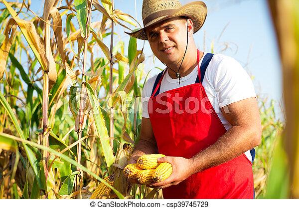 Farmer in corn field - csp39745729