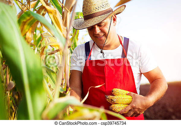 Farmer in corn field - csp39745734