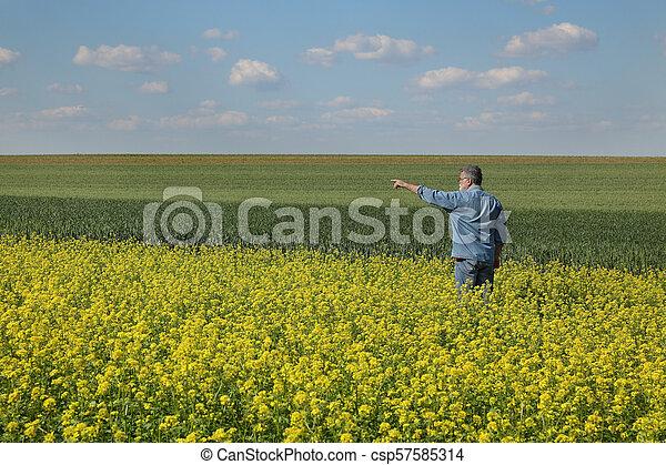 Farmer inspecting rapeseed crop in field - csp57585314