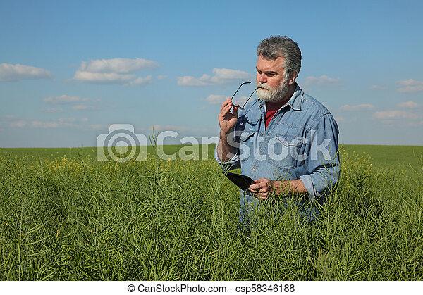 Farmer inspecting rapeseed crop in field - csp58346188