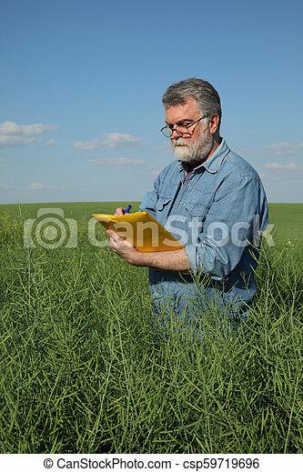 Farmer inspecting rapeseed crop in field - csp59719696