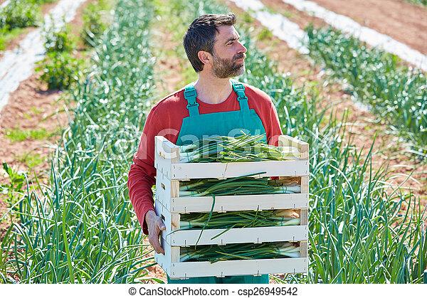 Farmer man harvesting onions in Mediterranean - csp26949542