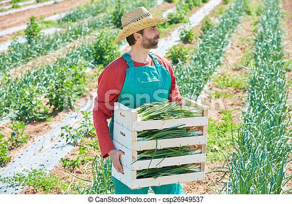 Farmer man harvesting onions in Mediterranean - csp26949537