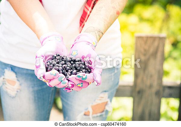 Farmer or gardener woman holding blueberries in hands - csp60474160