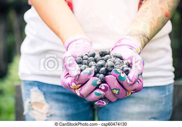 Farmer or gardener woman holding blueberries in hands - csp60474130
