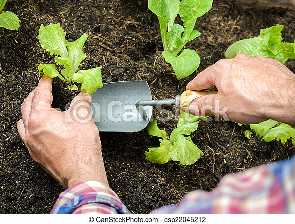 Farmer planting young seedlings - csp22045212