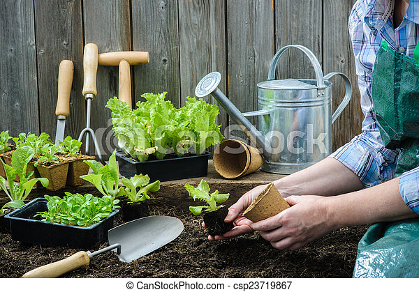 Farmer planting young seedlings - csp23719867