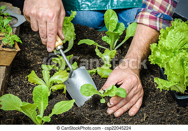 Farmer planting young seedlings - csp22045224