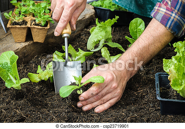 Farmer planting young seedlings - csp23719901