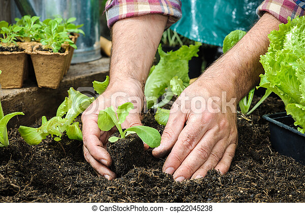 Farmer planting young seedlings - csp22045238