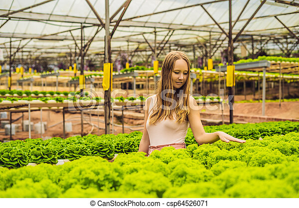 Farmer researching plant in hydroponic salad farm. Agriculture and scientist concept - csp64526071
