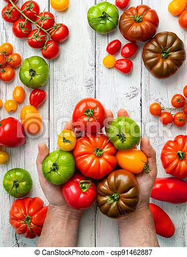 Farmer shows tomatoes of different varieties - csp91462887