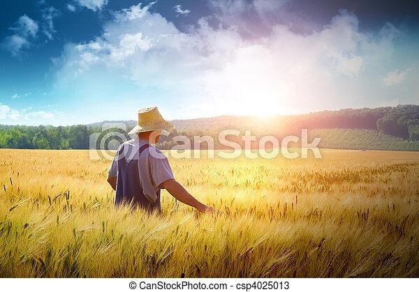Farmer walking through a wheat field - csp4025013