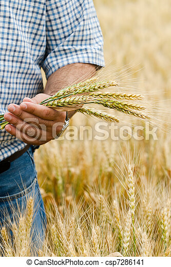 Farmer with wheat in hands. - csp7286141
