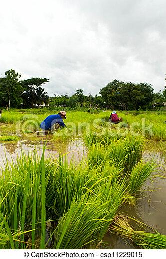 Farmers - csp11229015