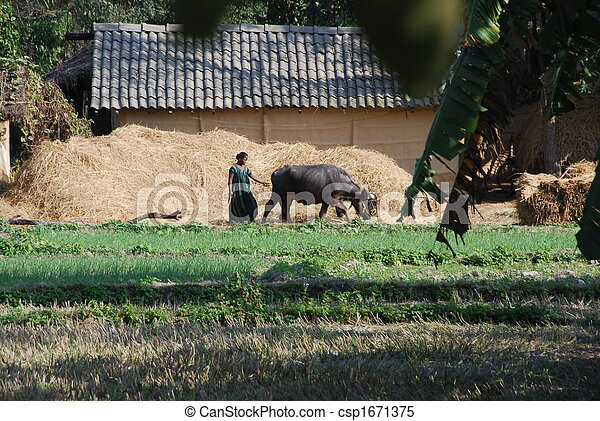 Farming 3 - csp1671375
