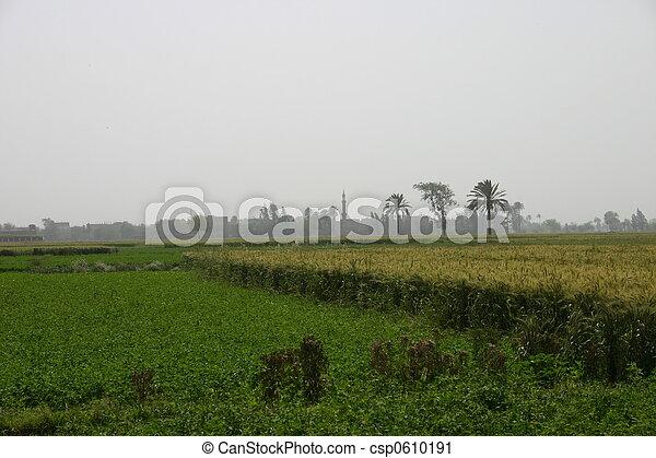 Farmland - csp0610191