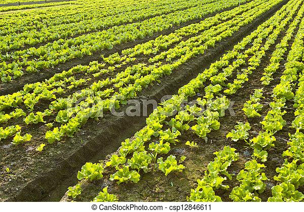 Farmland  - csp12846611