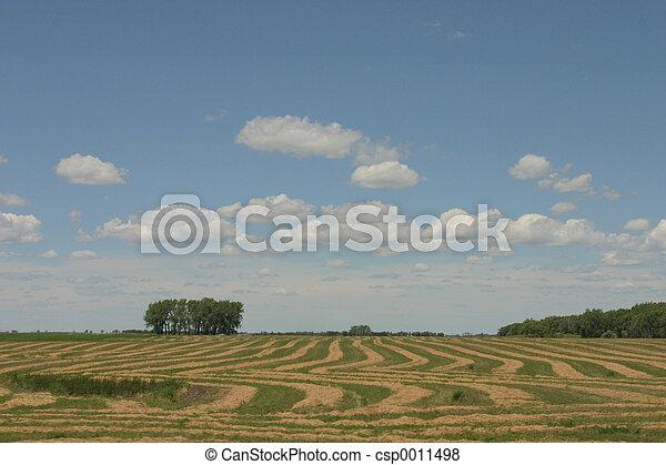 Farmland - csp0011498