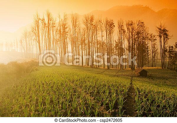 Farmland  - csp2472605