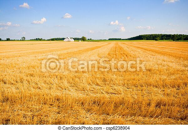 Farmland - csp6238904