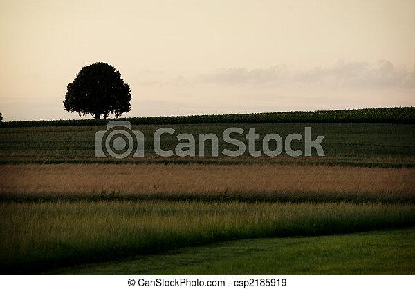 farmland - csp2185919