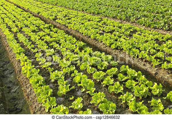Farmland  - csp12846632