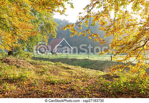 Fattoria mucche olandese fattoria autunno mucche for Piani di fattoria stonegate