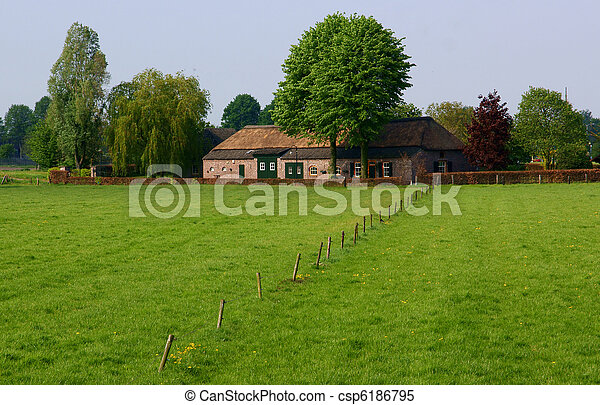 fattoria, olandese - csp6186795