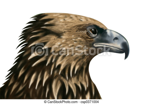 Faucon gros plan t tes dessin rechercher des - Dessin de faucon ...