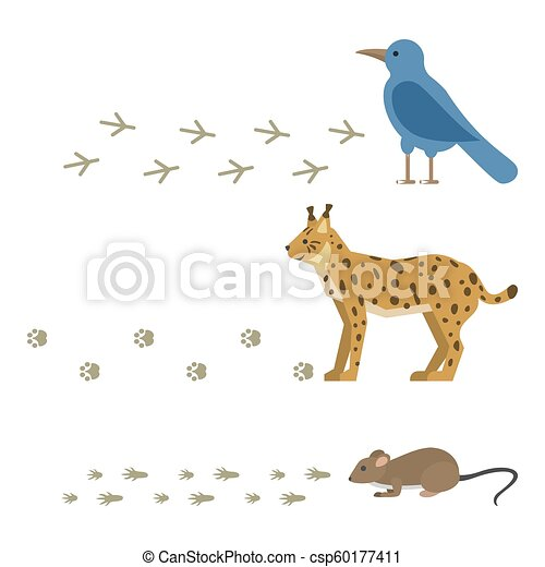 Las huellas de animales incluyen mamíferos y aves huellas de pie. Rastros de la vida silvestre pisan vectores de la naturaleza salvaje - csp60177411