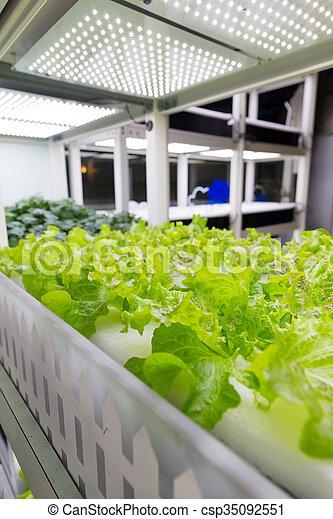 fazenda, vegetal, cultivo, verde, hydroponics - csp35092551