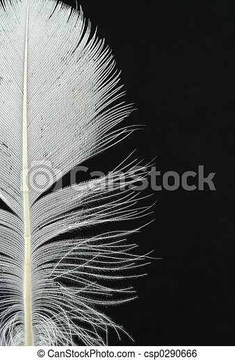 feather details on b - csp0290666