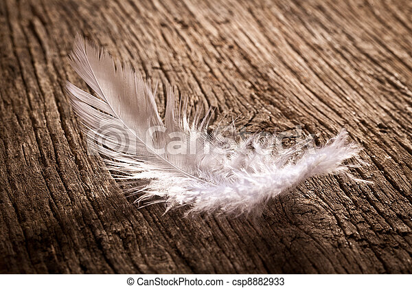 feather on old wooden desk - csp8882933